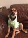 Maya - my son's rescue dog.  Isn't she beautiful?
