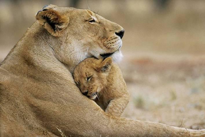 tiger mom & babe
