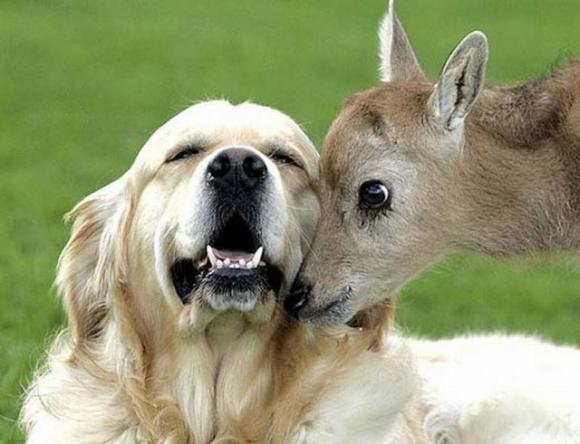 dog & doe