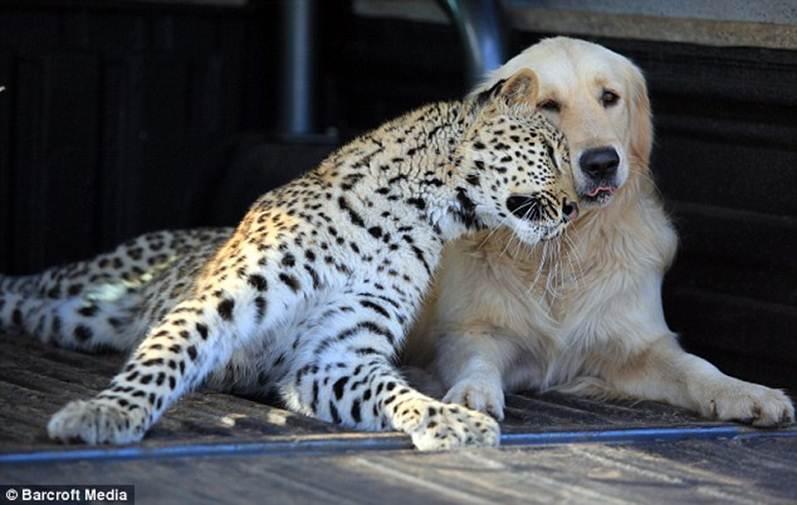 dog & leopard