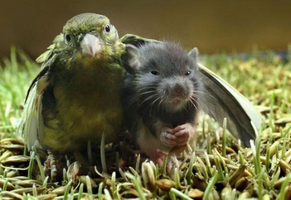 mouse & bird