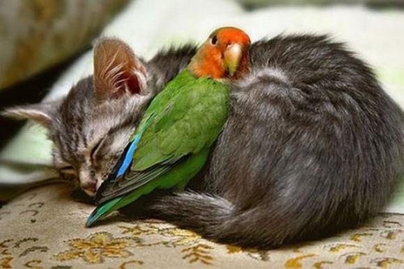 parrot & kitty