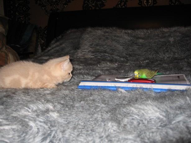 cat:bird1