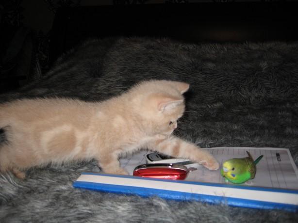 cat:bird2