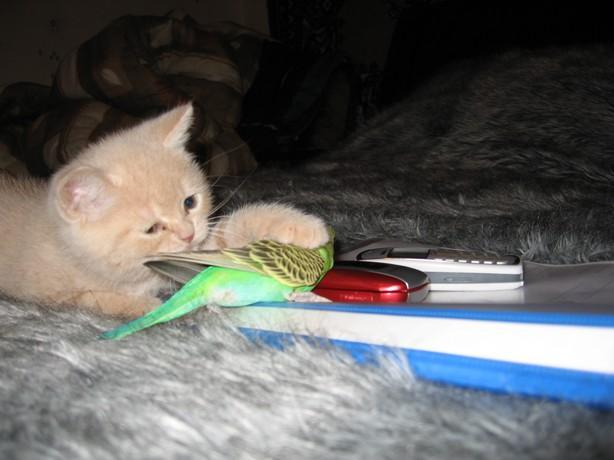cat:bird3