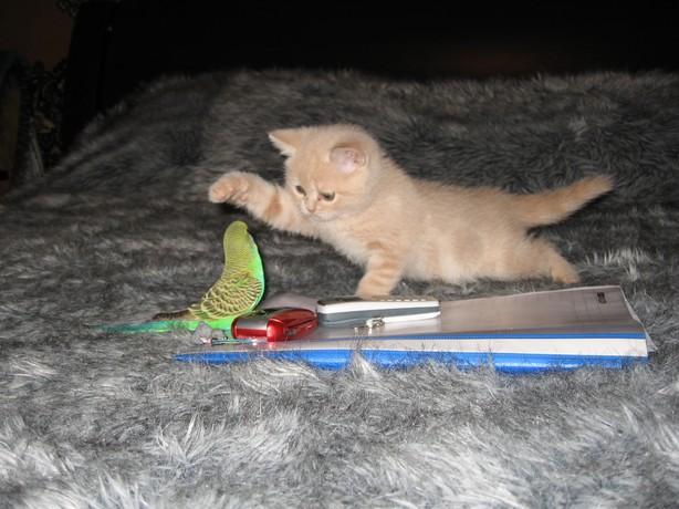 cat:bird4