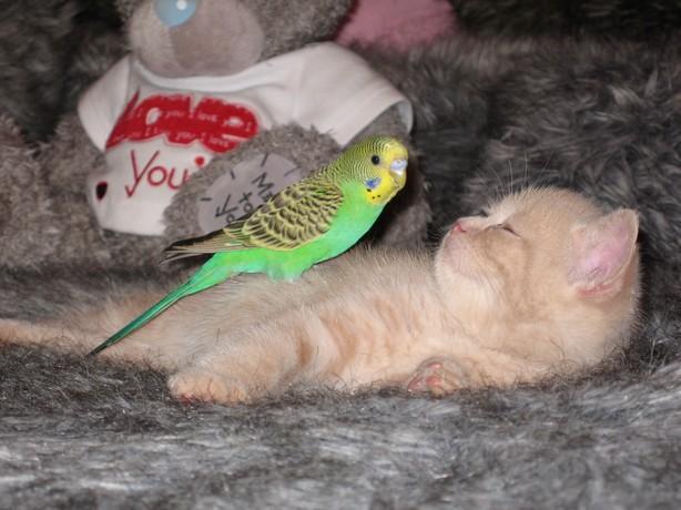 cat:bird5