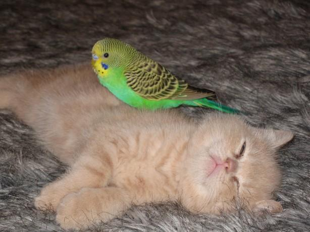 cat:bird7